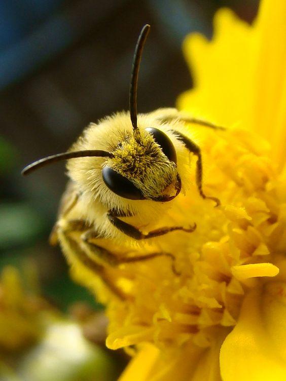 Cute Fuzzy Bee