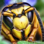 By Opo Terser - Face of a Southern Yellowjacket Queen (Vespula squamosa), CC BY 2.0, https://commons.wikimedia.org/w/index.php?curid=6179982